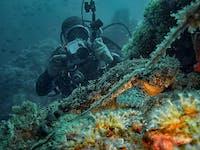 IVHQ Marine Conservation Diver in Croatia