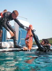 IVHQ Marine Conservation volunteers in Croatia