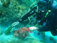 Marine Conservation Divers in Croatia with IVHQ
