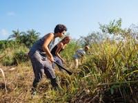 Volunteer in Agriculture in Ghana