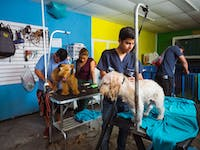 Volunteer on the animal care project in Guatemala with IVHQ