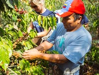 Volunteering on the Eco-Agriculture project in Guatemala