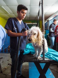 Volunteering on the animal care project in Guatemala with IVHQ