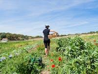 Agriculture volunteer in Madrid, Spain with IVHQ