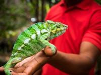 Explore Lemur park during an IVHQ weekend