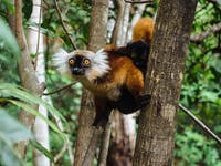 IVHQ Forest Conservation volunteers in Madagascar