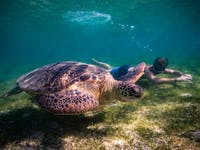 Swimming with turtles during an IVHQ weekend