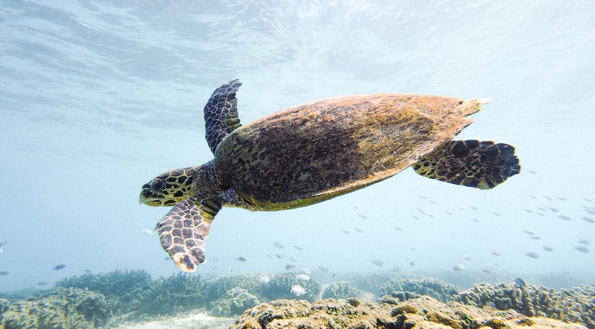 Marine Conservation project with IVHQ in Madagascar