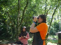 IVHQ volunteers doing behavior monitoring on the Orangutan Conservation project in Malaysia