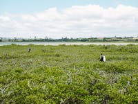 New Zealand Coast and Waterway Conservation project volunteers in mangroves