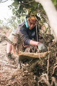 Volunteer in New Zealand Native Forest and Waterway Restoration Project