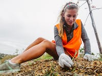 New Zealand Native Forest and Waterway Restoration project volunteer weeding