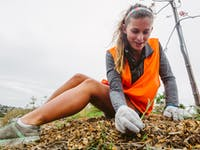 New Zealand Coast and Waterway Conservation volunteer weeding