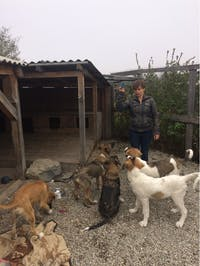 IVHQ Animal Care volunteers in Romania