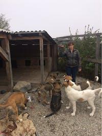 IVHQ Animal Care volunteers in Romania
