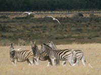 Conservation volunteer wildlife in South Africa