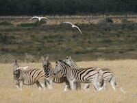 Wildlife Conservation Volunteer Abroad in South Africa