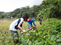 Outdoor work volunteers in Chiang Rai, Thailand with IVHQ