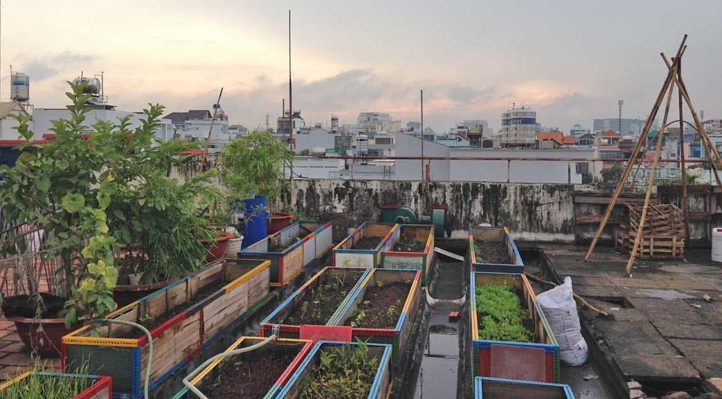 Rooftop garden at volunteer accommodation in Vietnam - Ho Chi Minh City