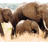 Affordable Wildlife & Animal Volunteer Abroad Projects