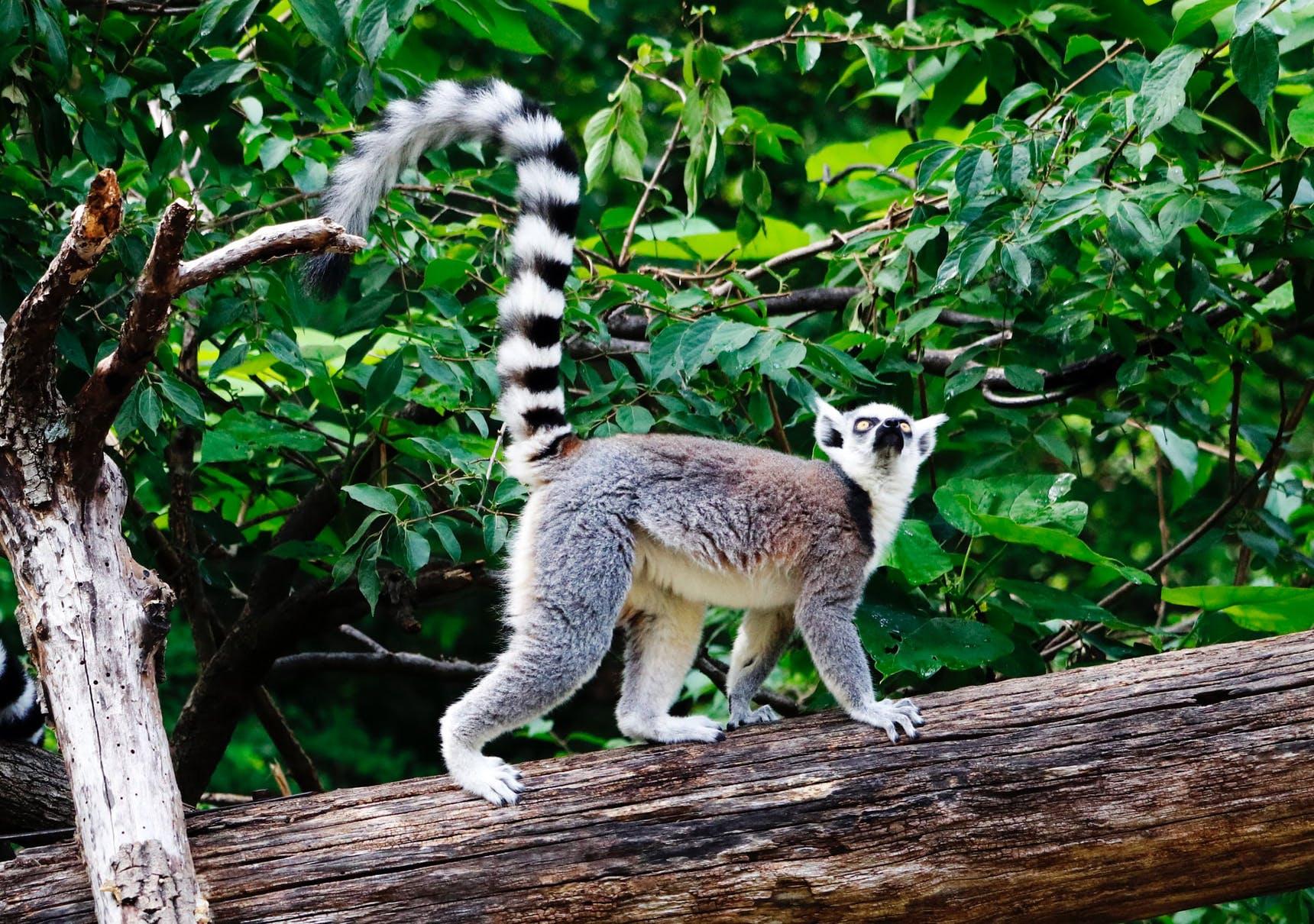 Volunteer in Madagascar