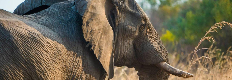 Affordable Animal and Wildlife Volunteering Abroad | IVHQ
