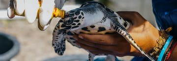 Sea Turtle and Marine Conservation