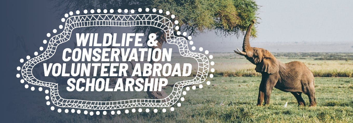 Apply for a Wildlife & Conservation Volunteer Abroad Scholarship