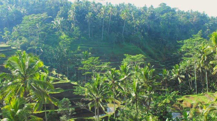 Visit the Rice Terraces in Bali with IVHQ