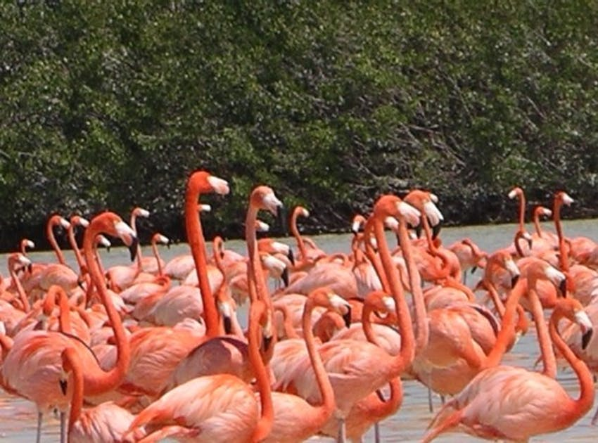 Check out the Celestun Beach and Wildlife Reserve in Mexico with IVHQ