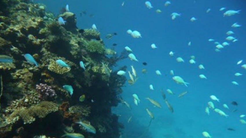 Diving during the weekend as av IVHQ volunteer in Fiji