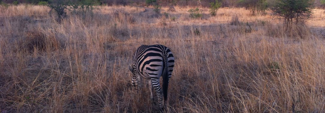 Travel and Tour options for IVHQ volunteers in Victoria Falls