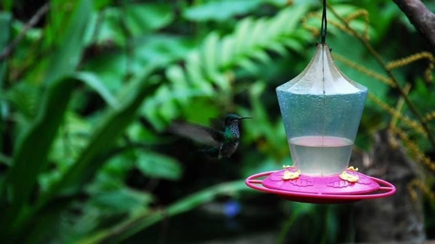 Visit the Cloud Forest as an IVHQ in Ecuador