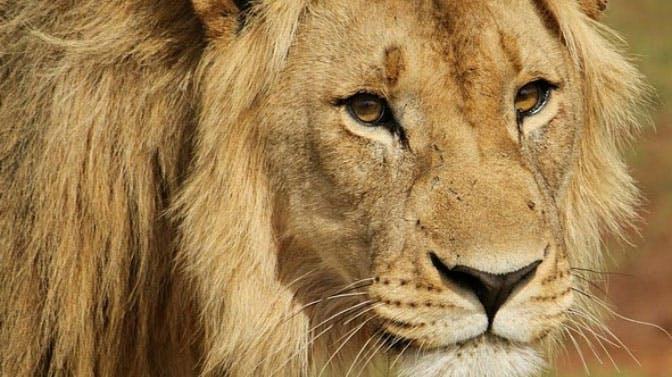 Visit a safari park as an IVHQ volunteer in Victoria Falls