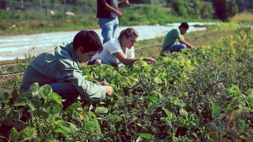Environmental volunteers in Mexico with IVHQ