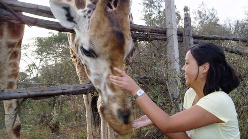 Visiting the Giraffe Center in Kenya as an IVHQ volunteer