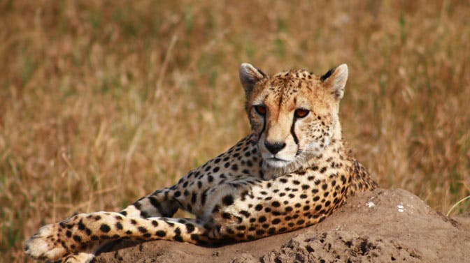 Going on a Safari during a spare weekend as a volunteer in Tanzania