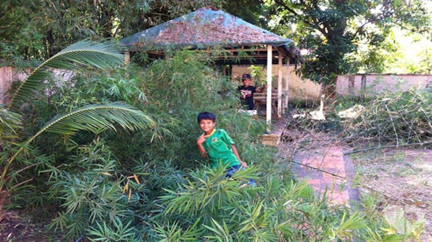 Clearing or vegetation begins