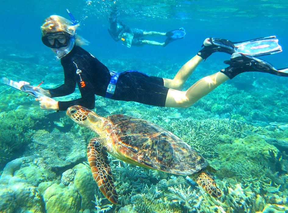 Great Barrier Reef Marine Conservation Volunteer Program in Australia - Cairns