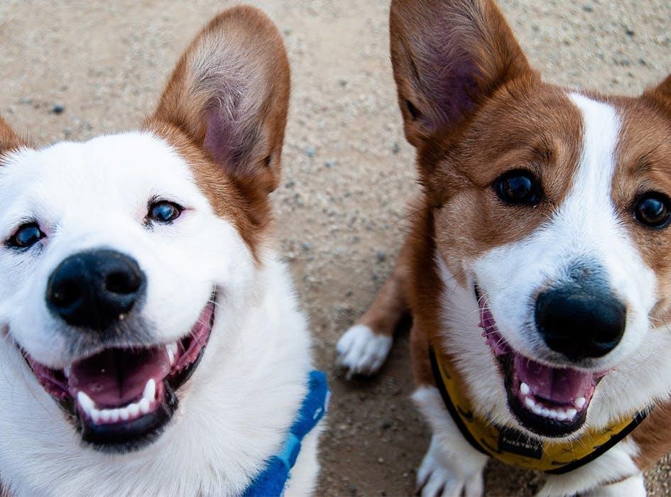Animal Care Volunteer Project in Costa Rica - San Jose