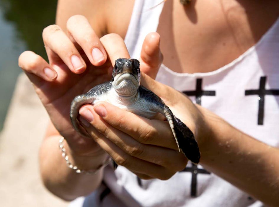 Turtle Conservation Volunteer Project - Costa Rica
