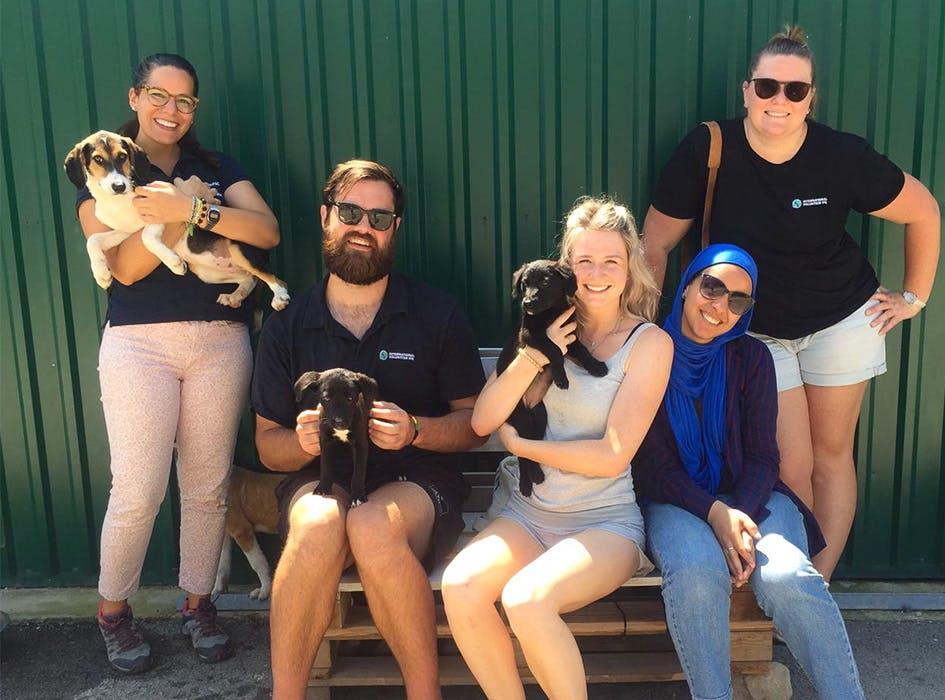 Animal Care Volunteer Project in Croatia - Split