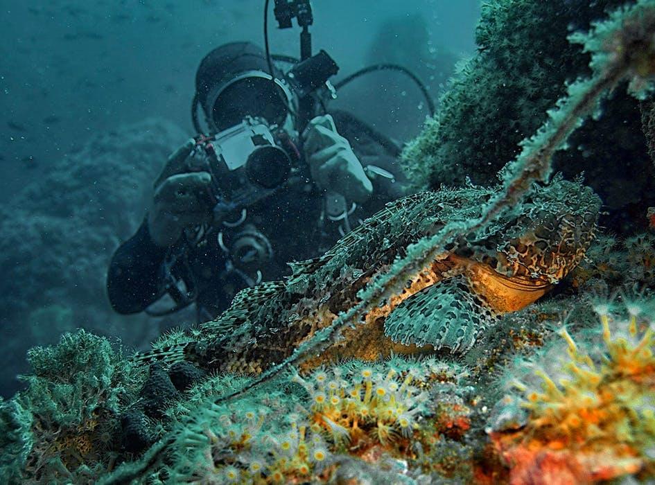 Marine Conservation Volunteer Program in Croatia - Split
