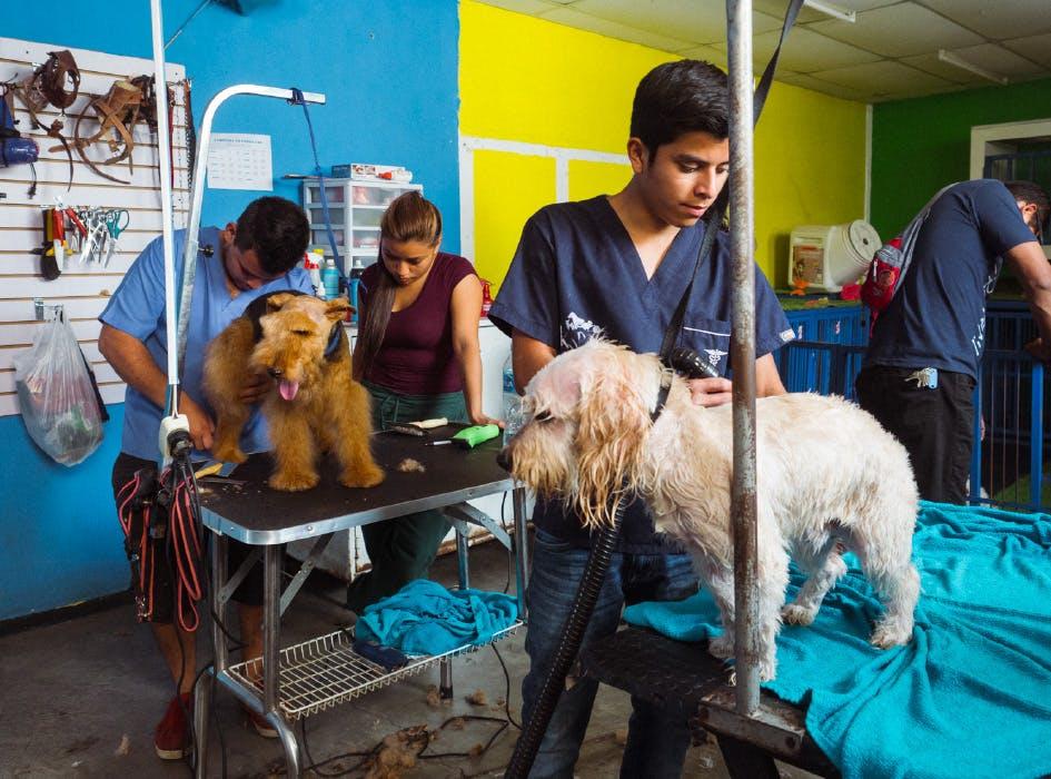 Animal Care Volunteer Project in Guatemala - Antigua