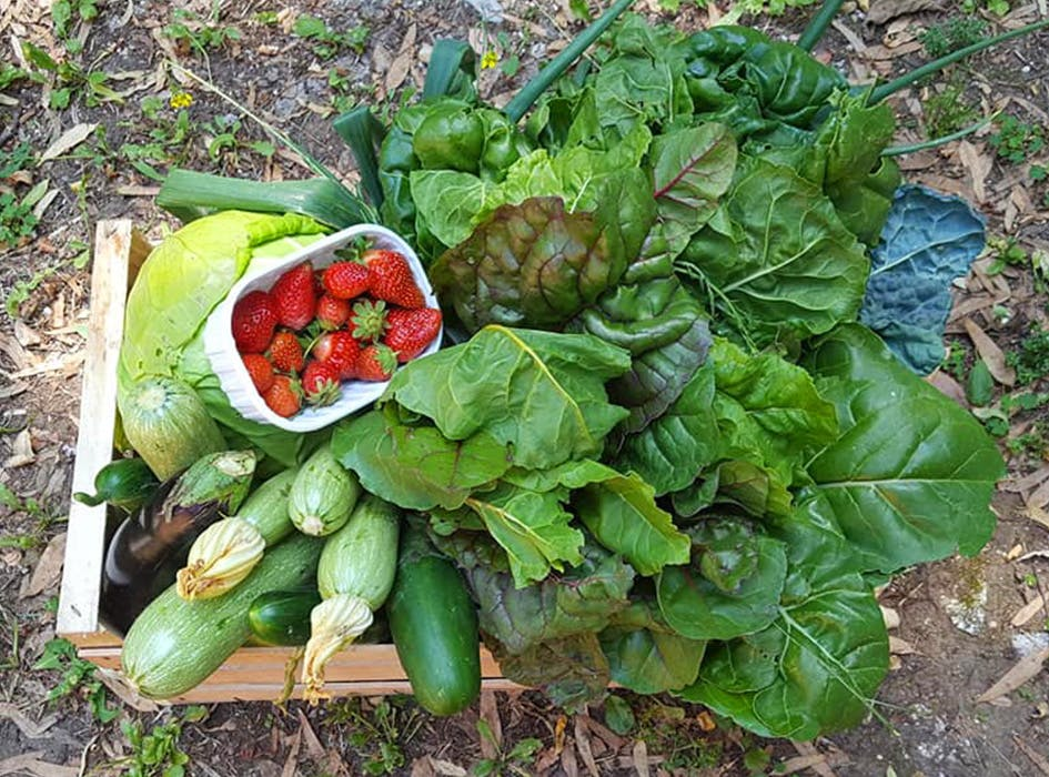 Sustainable Farming Volunteering in Rome - Italy