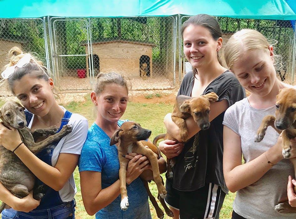 Animal Care Volunteer Program in Jamaica - St Mary