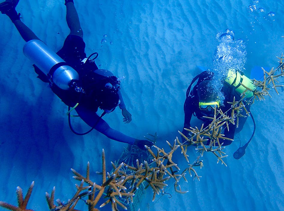Marine Conservation Volunteer Program in Jamaica - St Mary