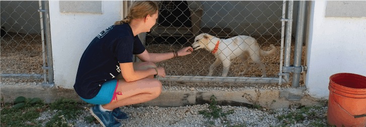 Animal care volunteer in Mexico with IVHQ