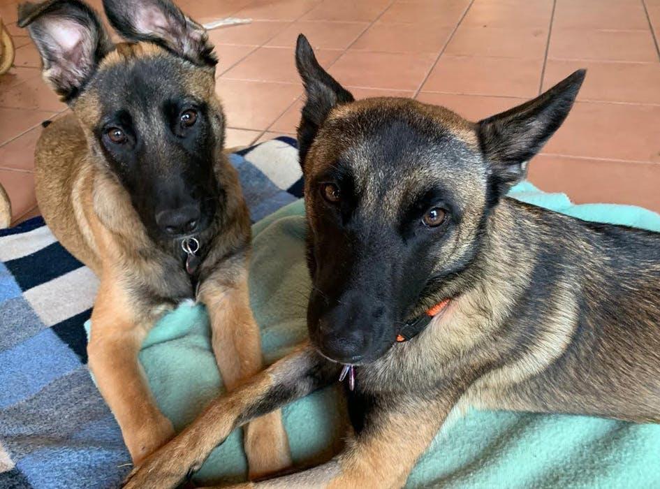 Animal Care Volunteer Project in Mexico - Merida