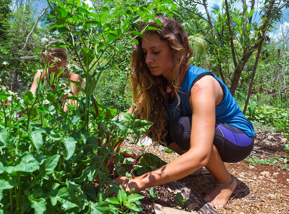 Sustainable Agriculture Volunteer Project in Mexico - Merida